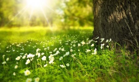 Найщиріші вітання з чудовим весняним святом праці – Днем Першого Травня!